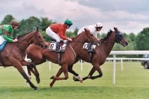 Bet at Horses
